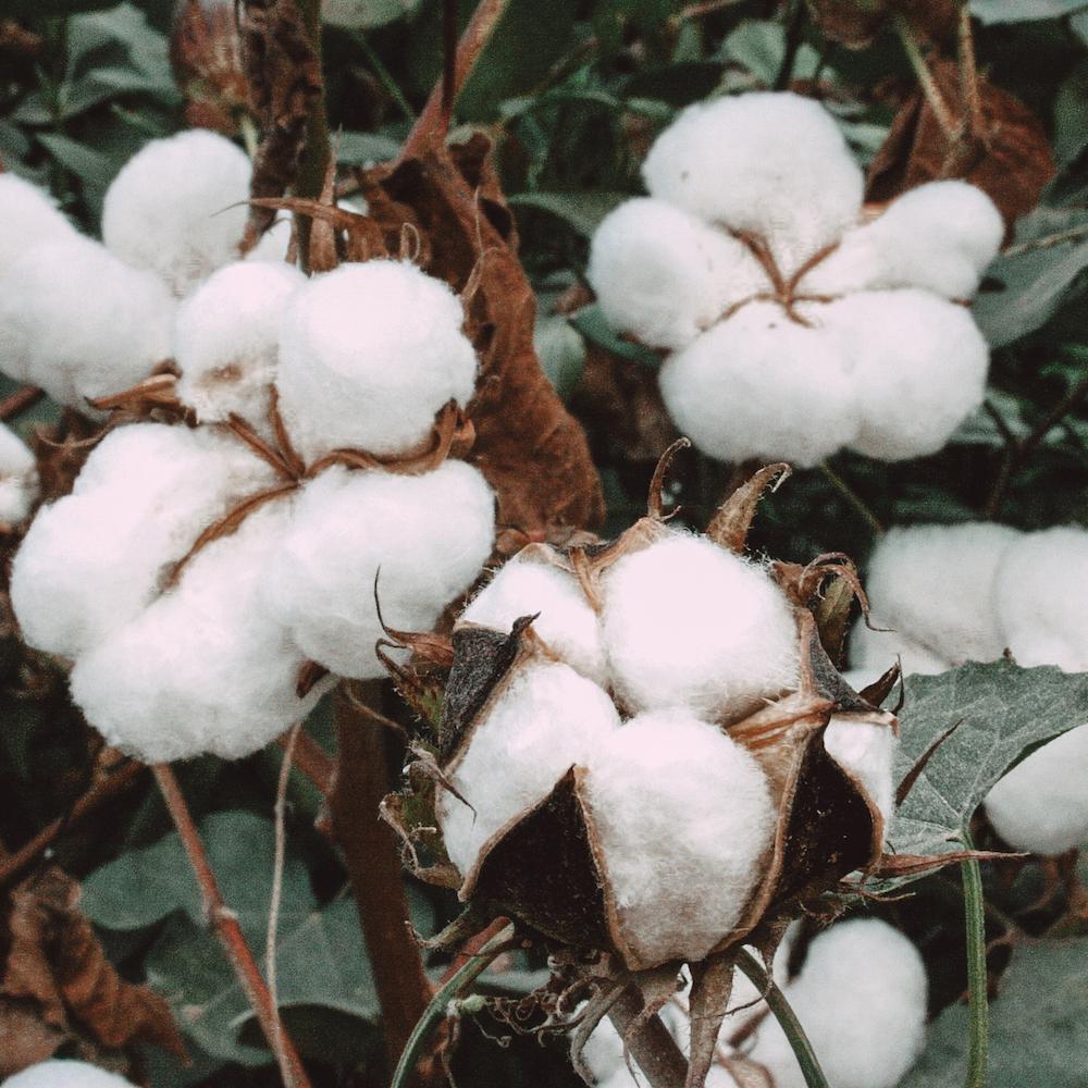 Minichou chouchou coton bio ecoresponsable